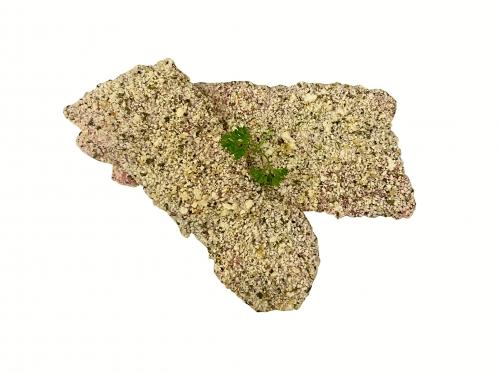 Pork Schnitzel Cut   Crumbed (varieties)